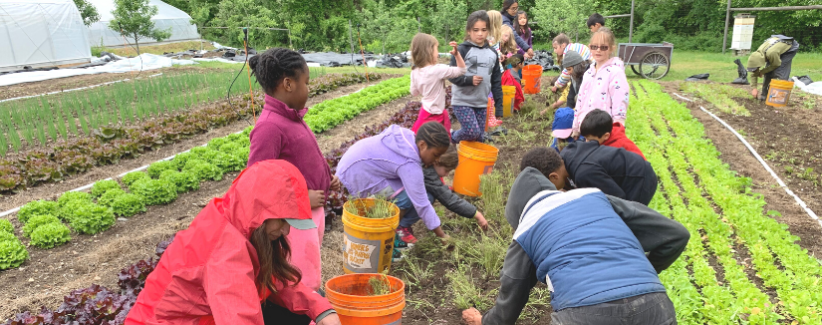 A group of young volunteers help clear a bed on the farm.