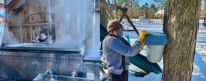Images showing farmer attending to the sap on the maple boiler and a farmer collecting sap from a bucket on a maple tree.
