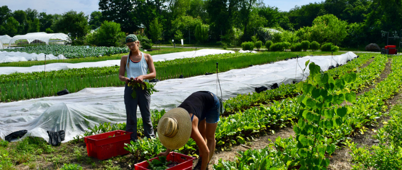 Image of Avery harvesting beets on the farm