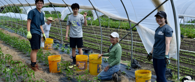 Barb and other volunteers cultivate a bed.