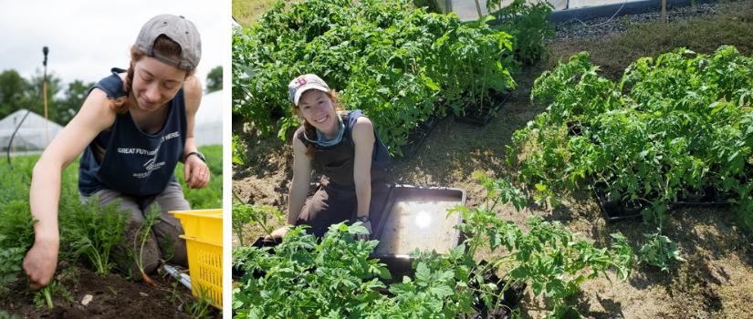 Rae harvesting carrots. Rae with tomato plants.