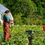 Farmer Anna harvests in her rain gear.